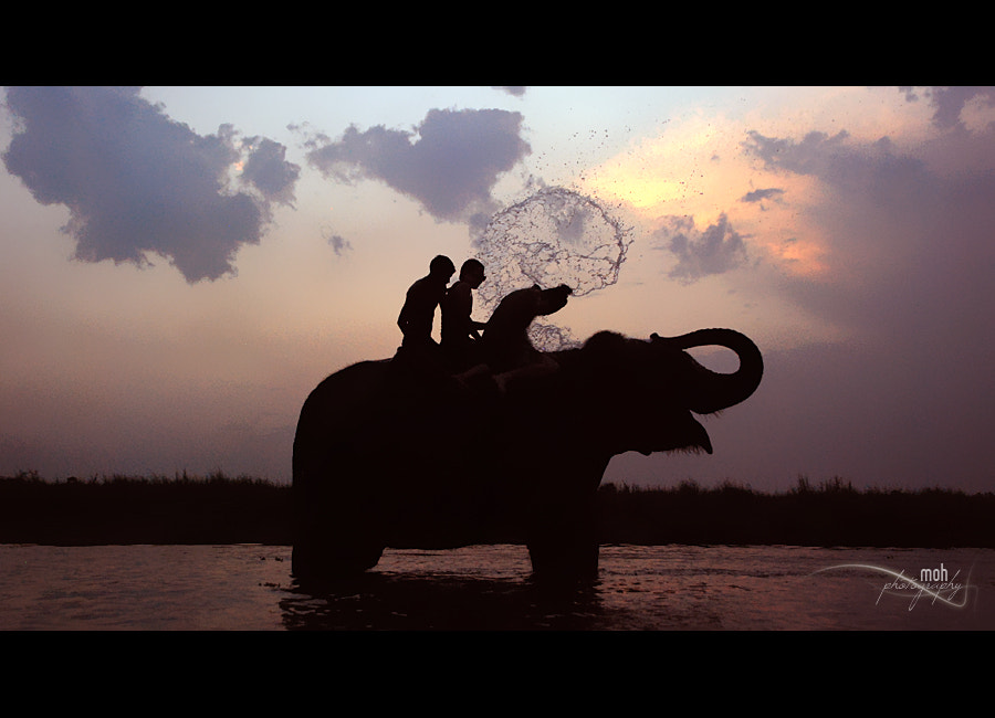 Photograph Elephant Bath III by Mohan Duwal on 500px