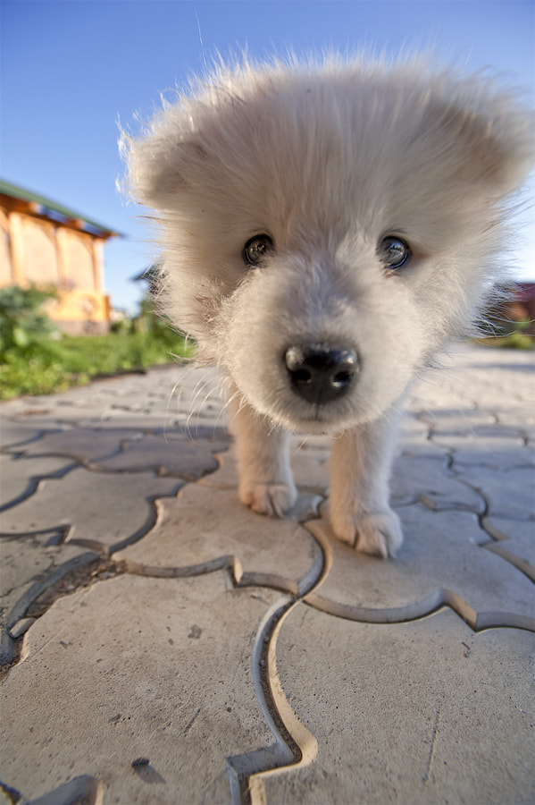 Photograph Doggy by Alexey Rudenko on 500px
