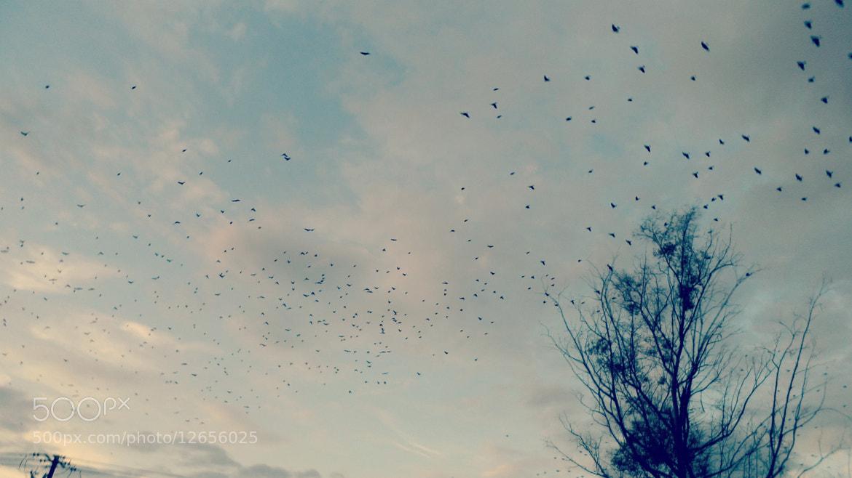 Photograph Bird by Paulina Tinajero on 500px