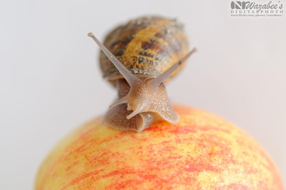 Photograph Snail by Fred  on 500px