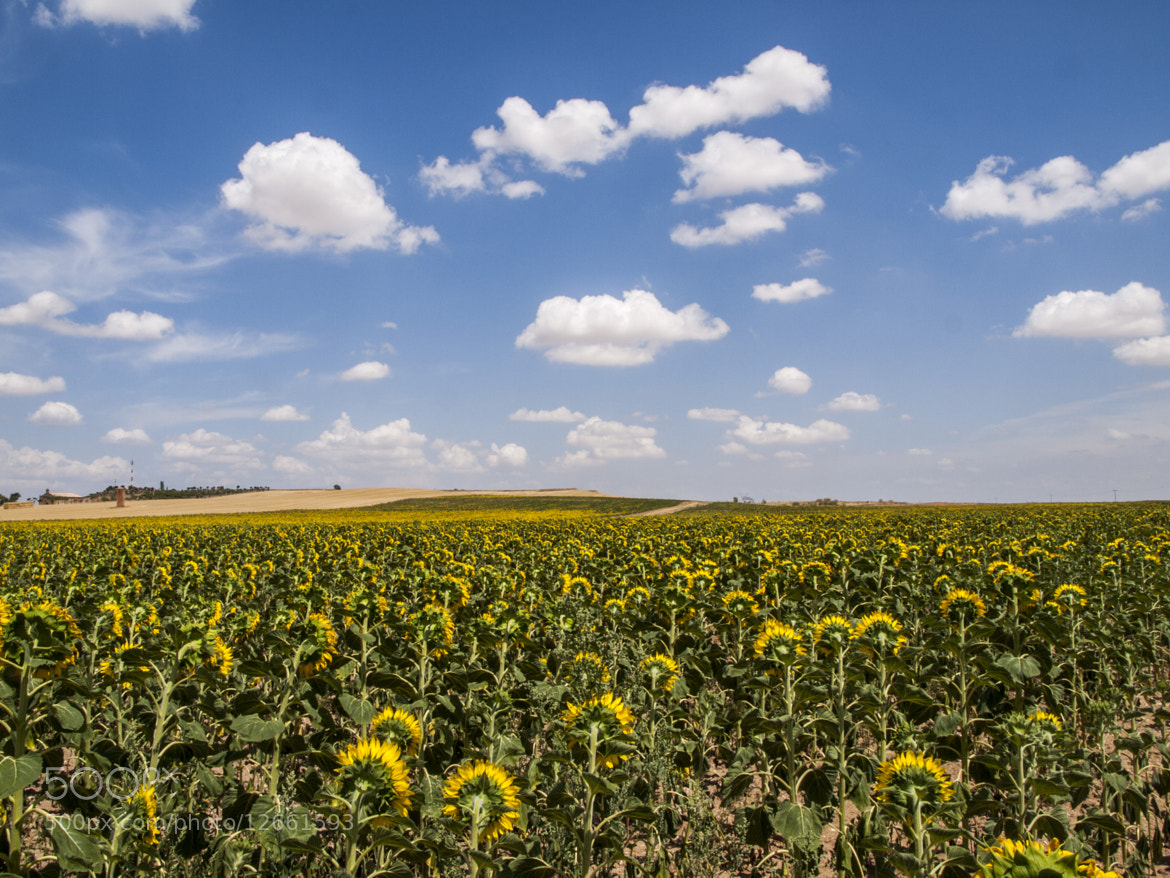 Photograph  Back Tournesol by Juan David Dueñas on 500px