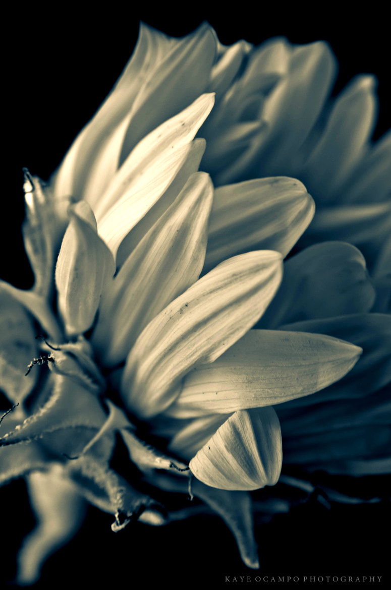 Photograph triste by kaye * on 500px