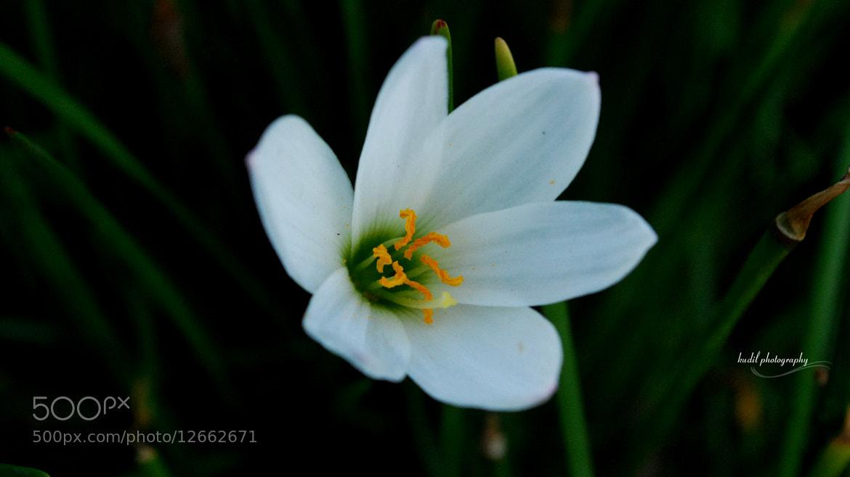 Photograph Sandal White by Sureshkumar Gopal on 500px