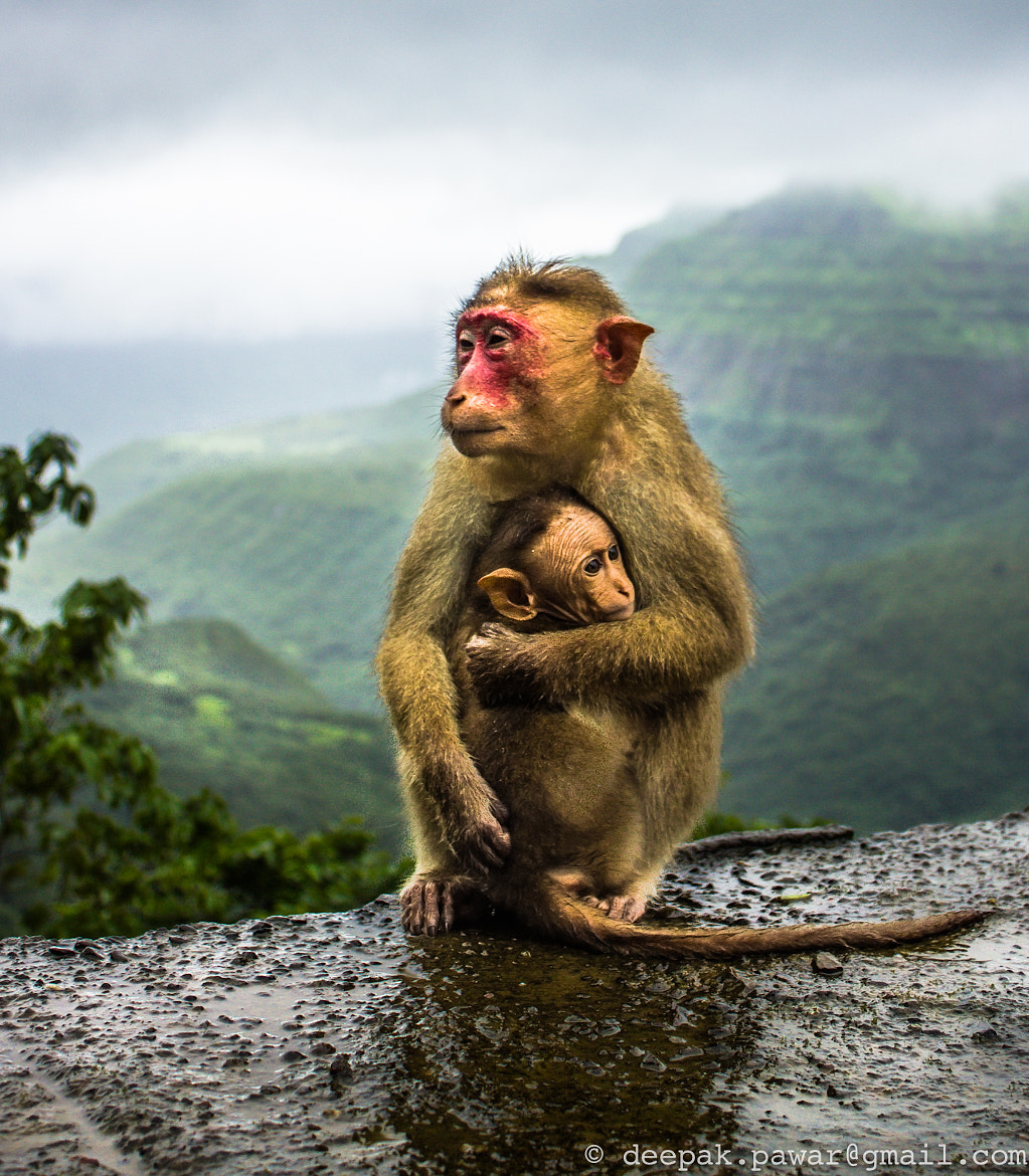 Photograph Poor helpless mommy looking for some food by Deepak Pawar on 500px