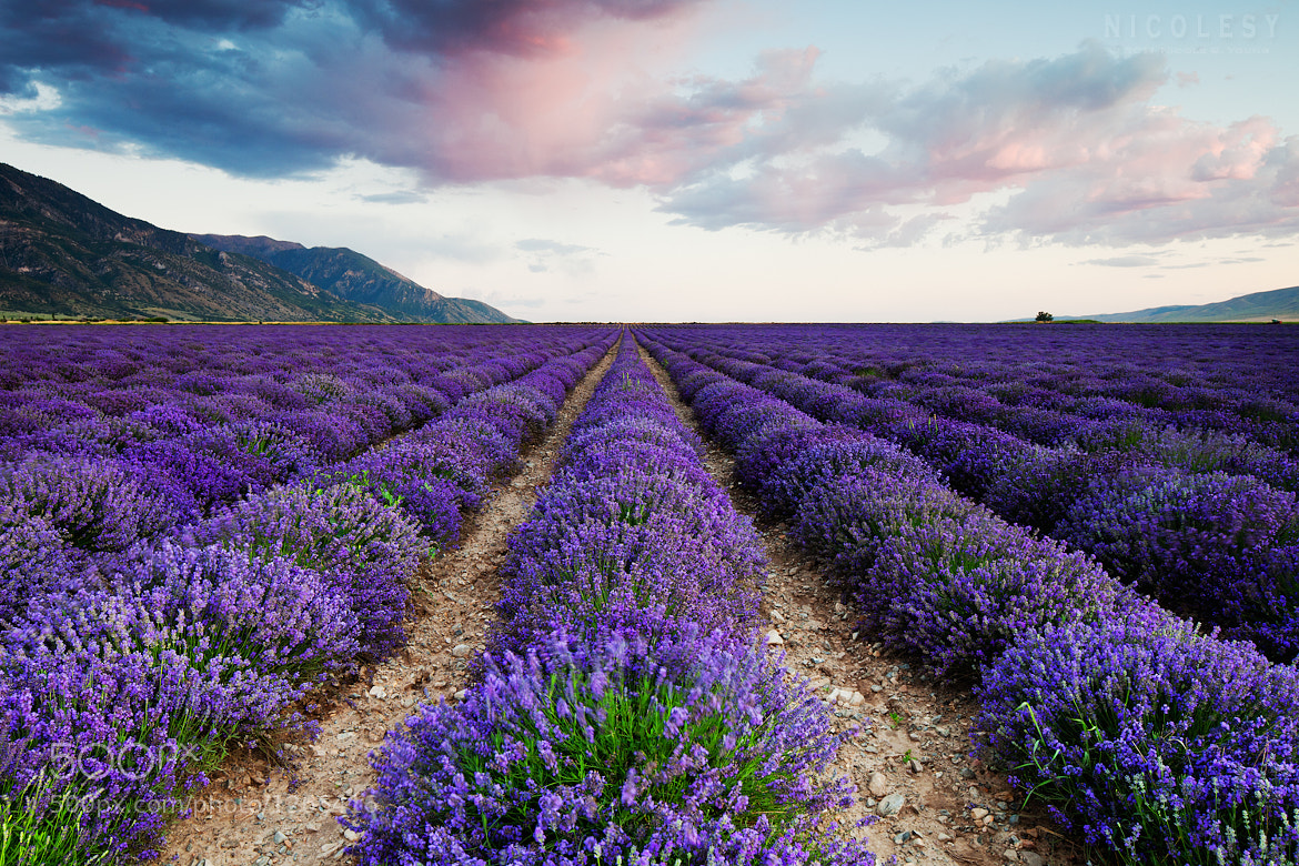 Photograph Pink Sky Purple Fields by Nicole S. Young on 500px