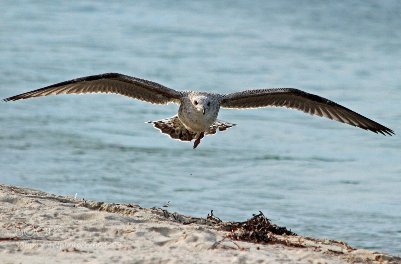 Photograph BIG BIRD by robin ulery on 500px