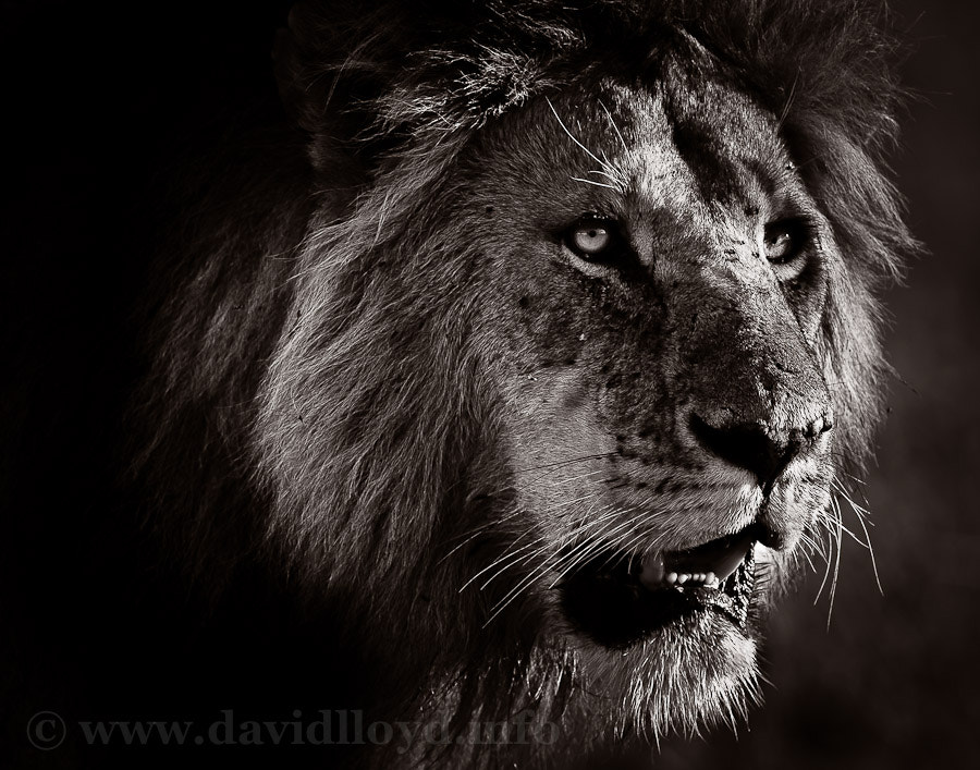 Photograph A Look of Menace by David Lloyd on 500px