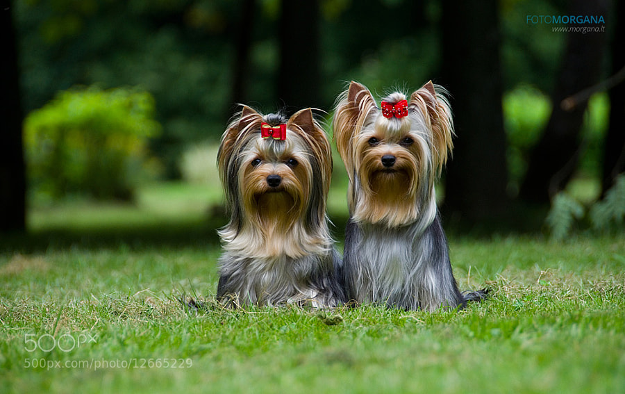 Viva and Jazzu - Photographing Pets Essential Tips