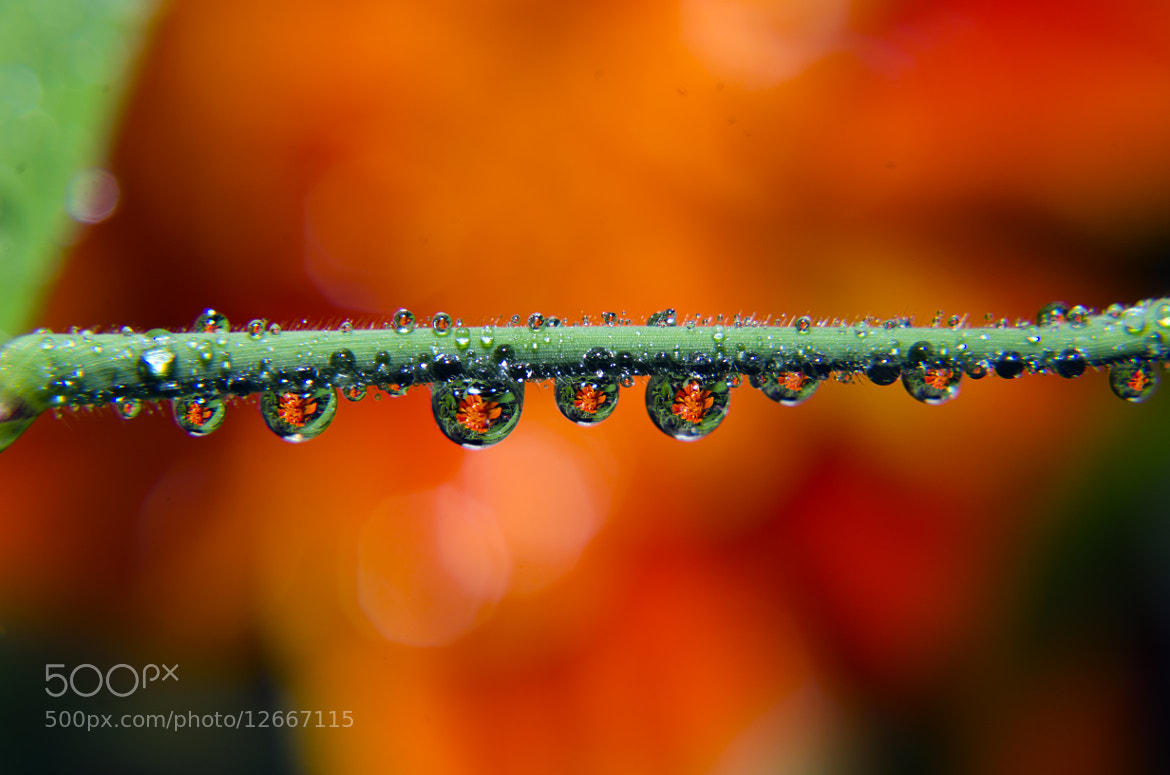Photograph dew in the morning by muh talifun on 500px