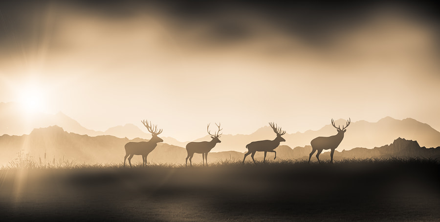 The Deer Hunter by The Blurred Lens   . on 500px.com