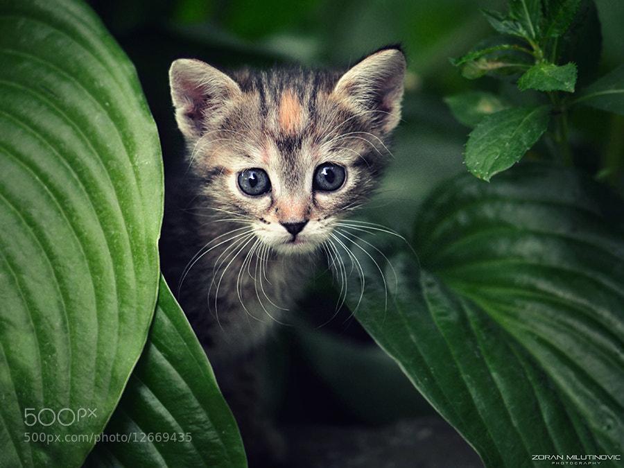 Photograph Hello Kitty by Zoran Milutinovic on 500px