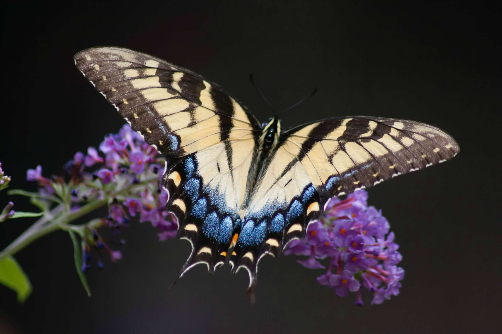 Photograph Butterfly by Beth Blackwell Cullen on 500px