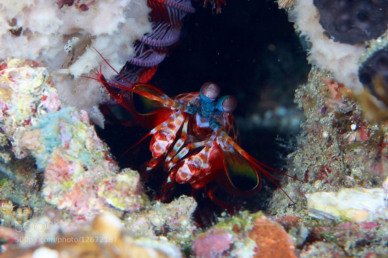 Photograph Mantis Shrimp by Kirin Goh on 500px