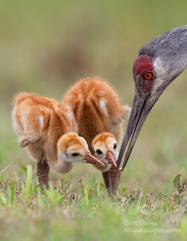 Photograph The Crane Family by Alfred Forns on 500px