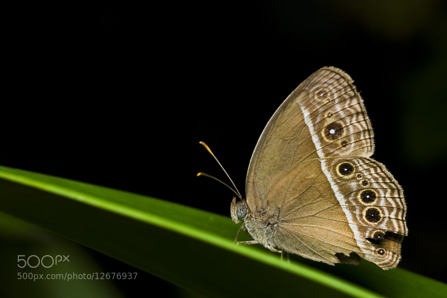Photograph Butterfly by Johari Saad on 500px