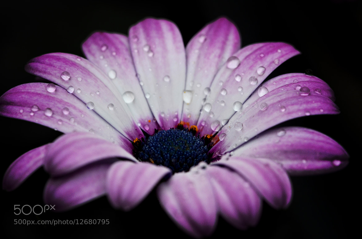Photograph FLOWER POWER by Sébastien Chambre on 500px