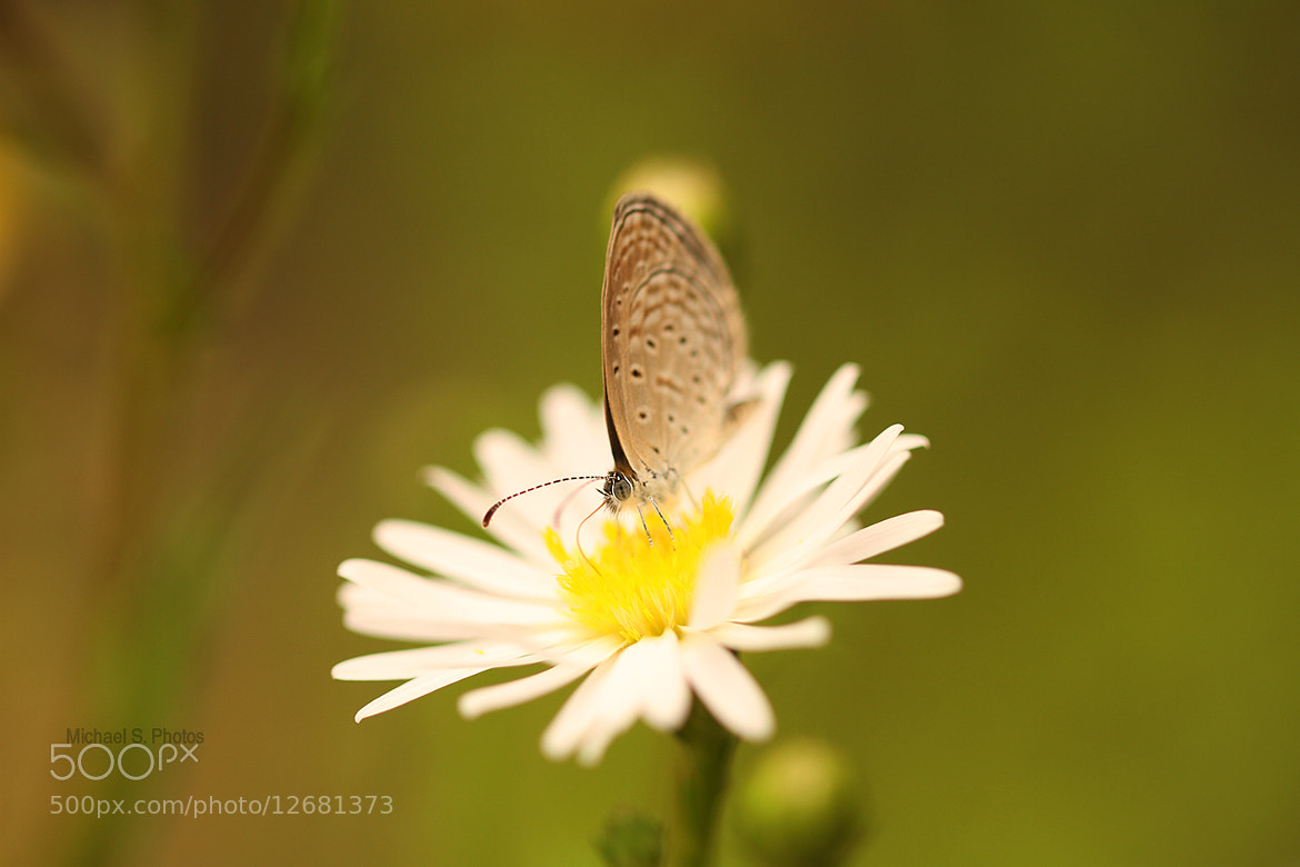 Photograph Butterfly by Michael Savellano on 500px