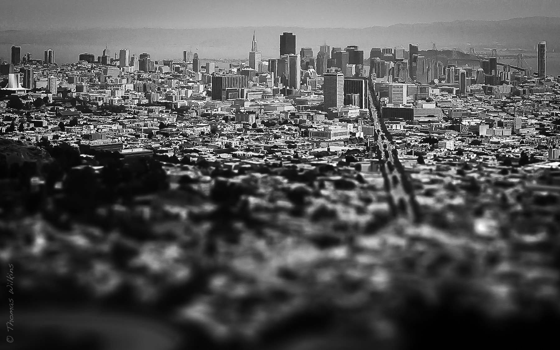 Photograph Concrete Jungle by Tom Wilkins on 500px