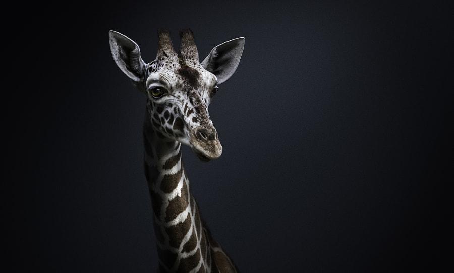 African Beauty by Mandy Karlowski