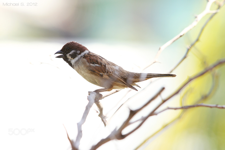 Photograph Bird by Michael Savellano on 500px