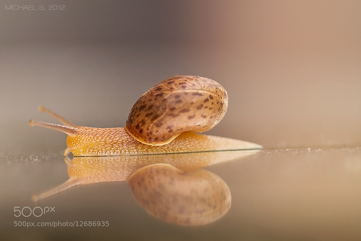 Photograph Snail by Michael Savellano on 500px