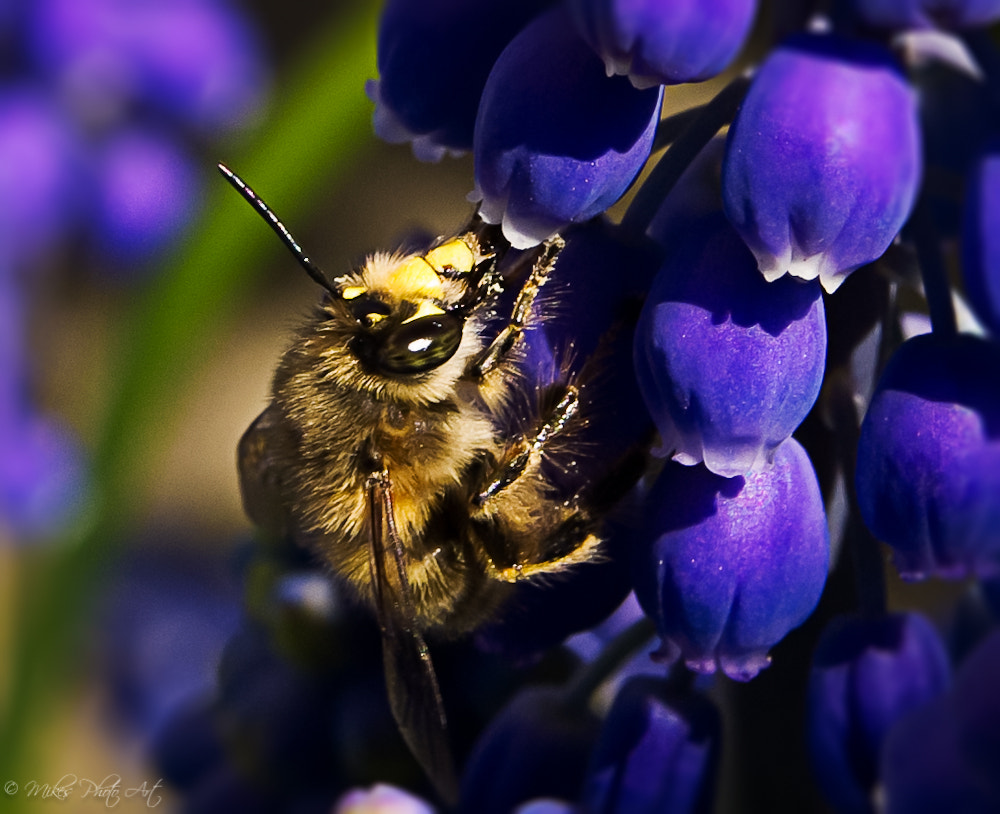 Photograph Bee by Michael Suppan on 500px