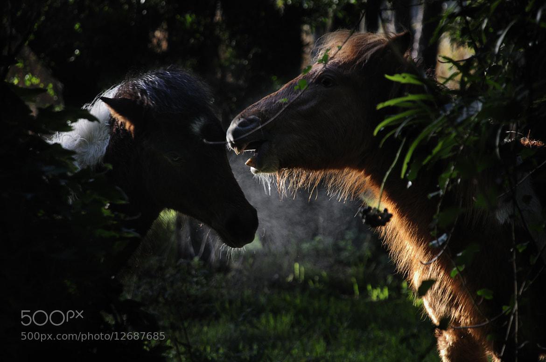 Photograph Un secreto by Mario Boh on 500px