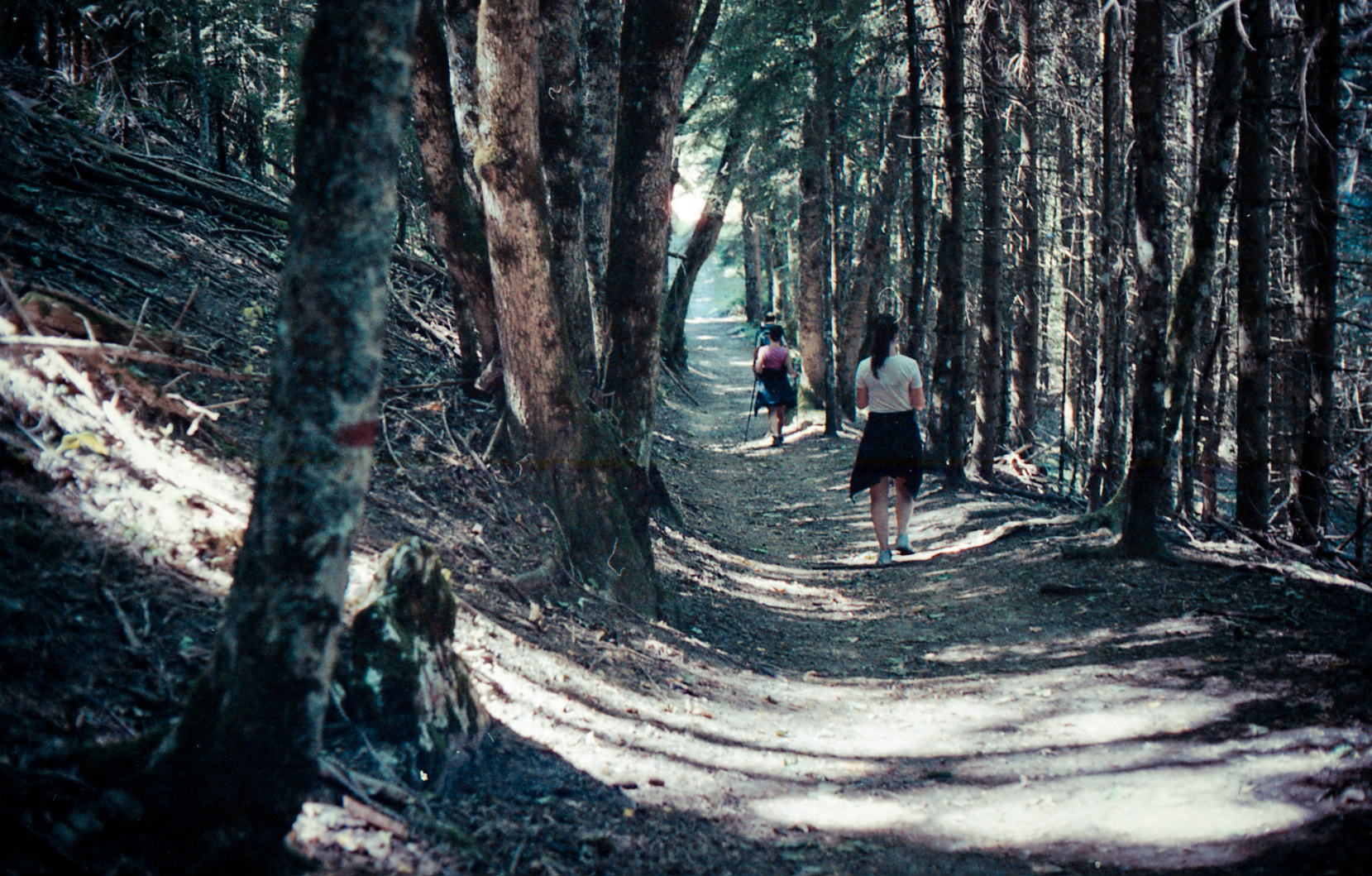 Photograph forest hike by syl pe on 500px