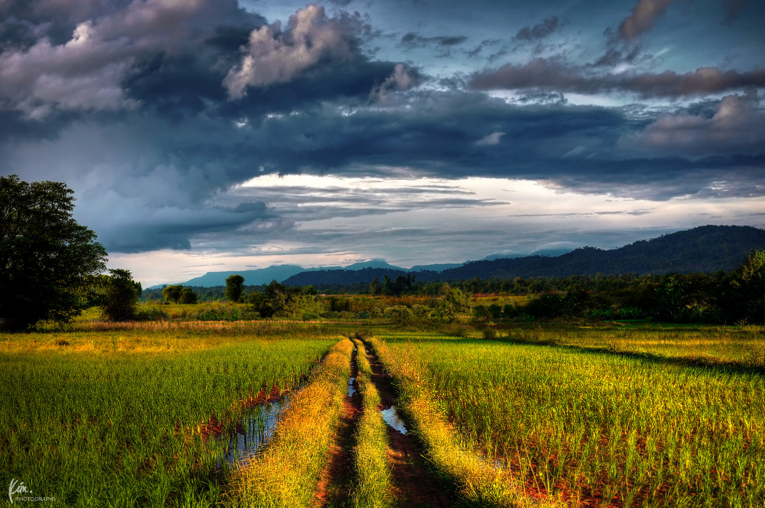 Photograph PADDY FIELD by Kim Thong Zuk  on 500px
