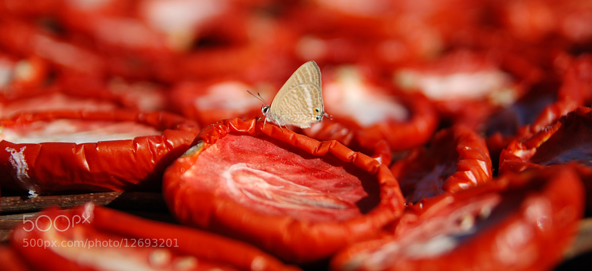 Photograph Butterfly tomato by Antonio Fuggi on 500px
