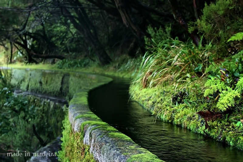 Photograph Levada das 25 Fontes by virgílio silva on 500px