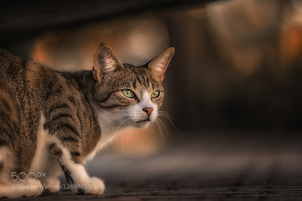 Photograph under the car by Detlef Knapp on 500px