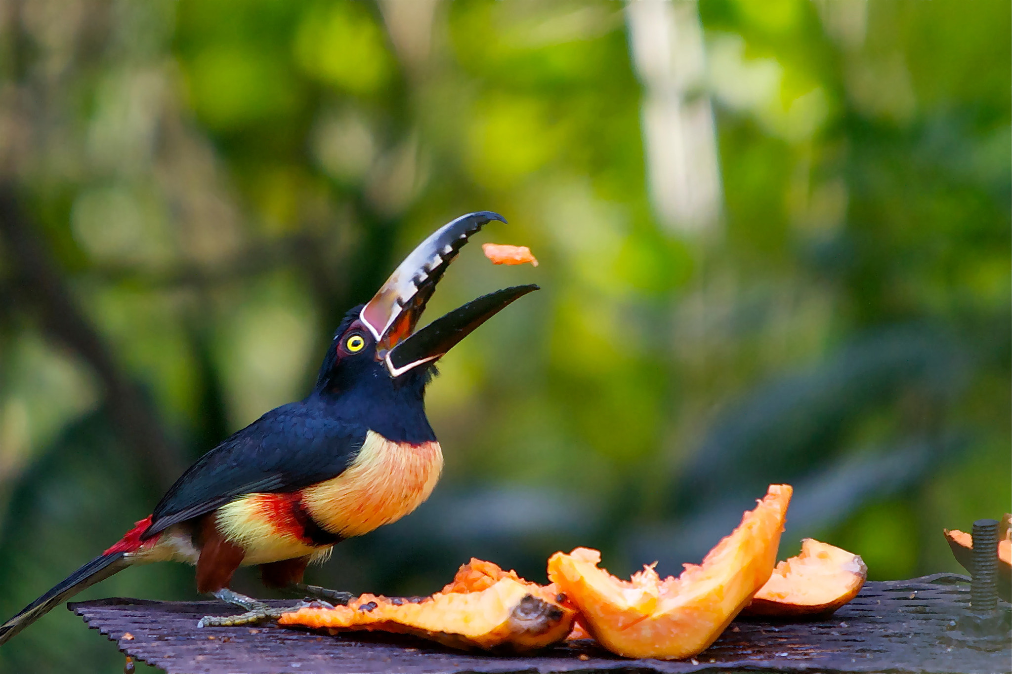Photograph Breakfast Companion by Michael Downey on 500px