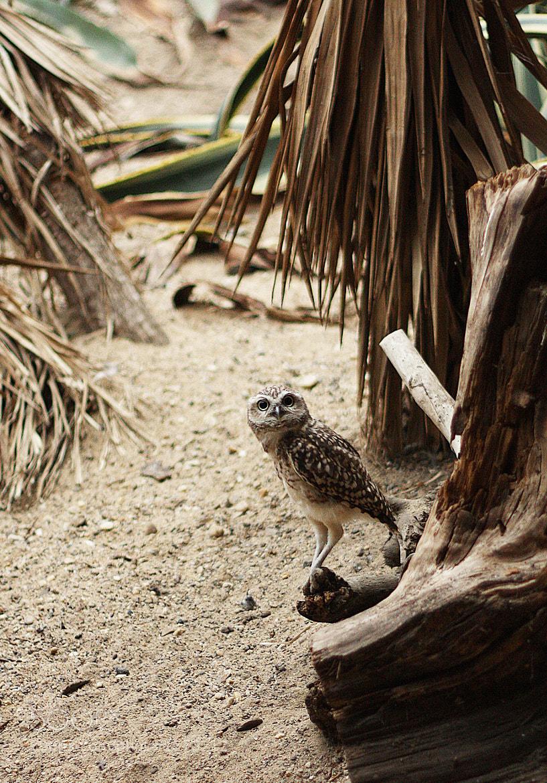 Photograph Owl by Victoria Antonova on 500px