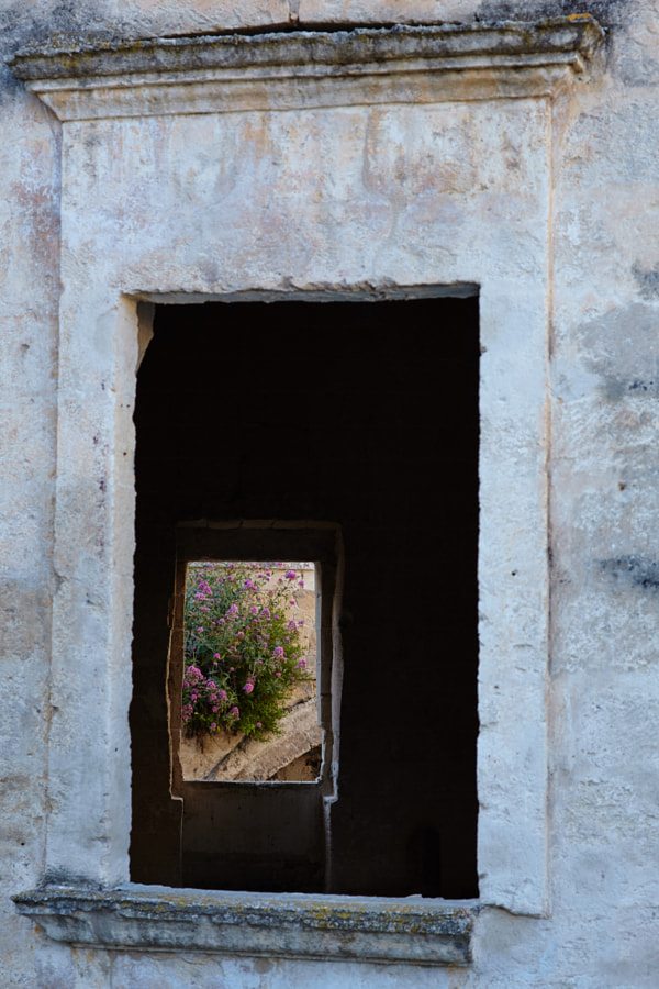 Flowers in windows