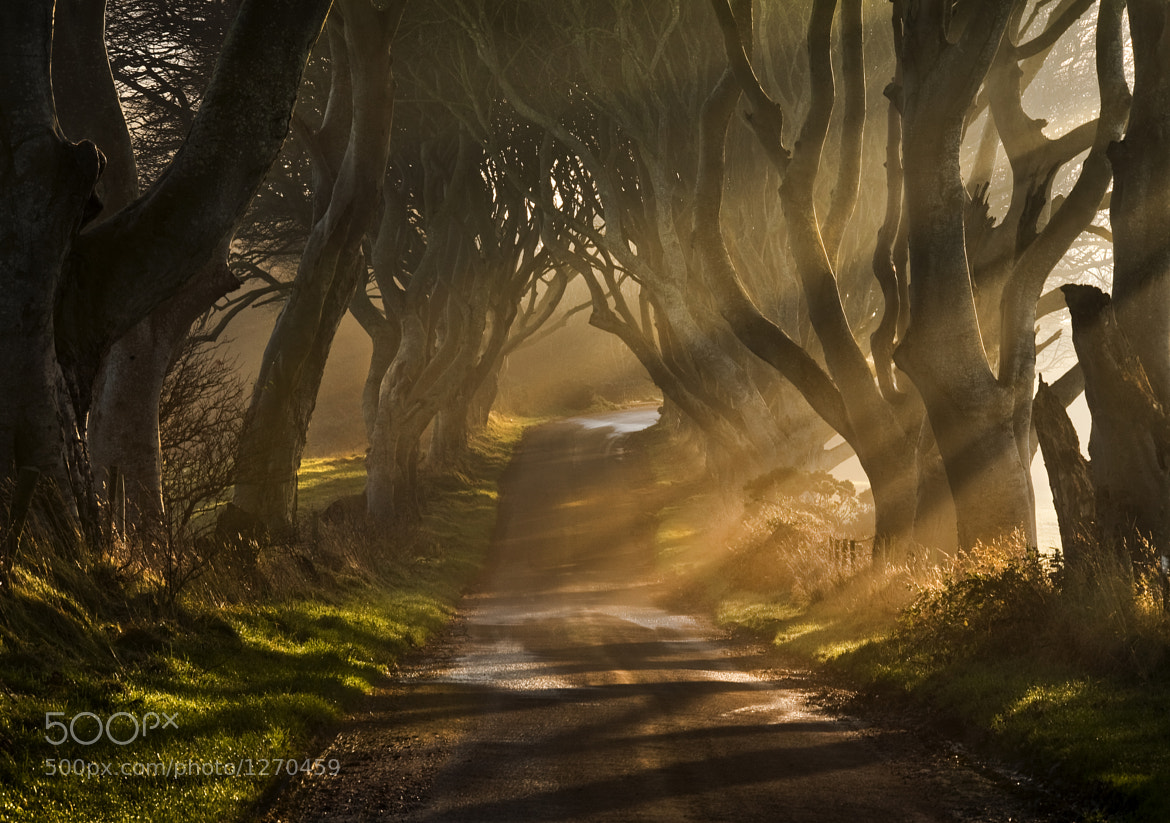 Photograph The Road Goes Ever On & On by Gary McParland on 500px