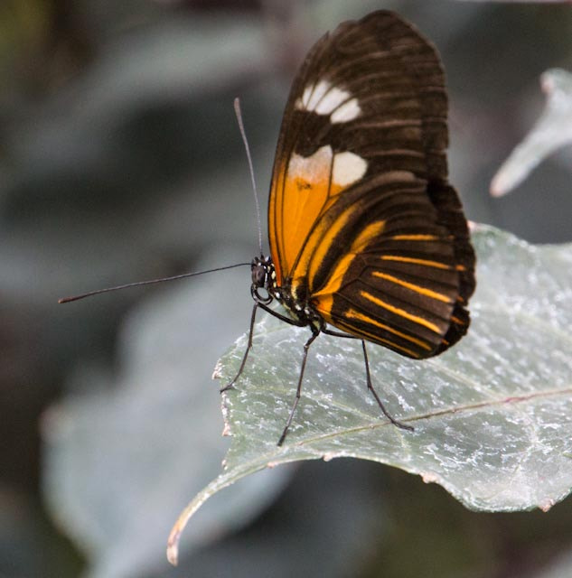 Photograph Butterfly on crystal leaf by Jim Brewer on 500px