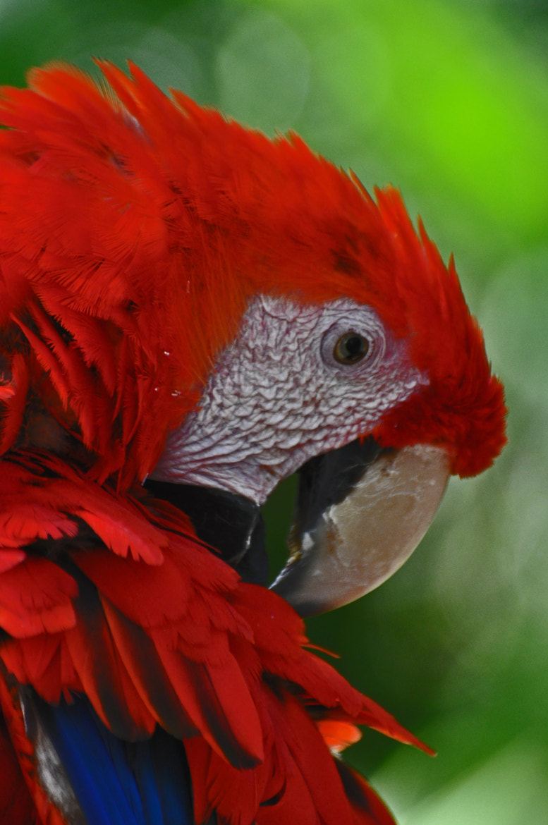 Photograph Macaw Colors by Karen King on 500px
