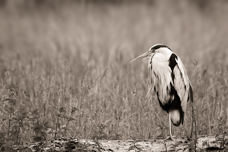 Photograph Africa B&W V by Steven Reburgh on 500px