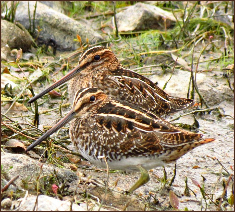 Photograph Wilson Snipes! by colleen thurgood on 500px