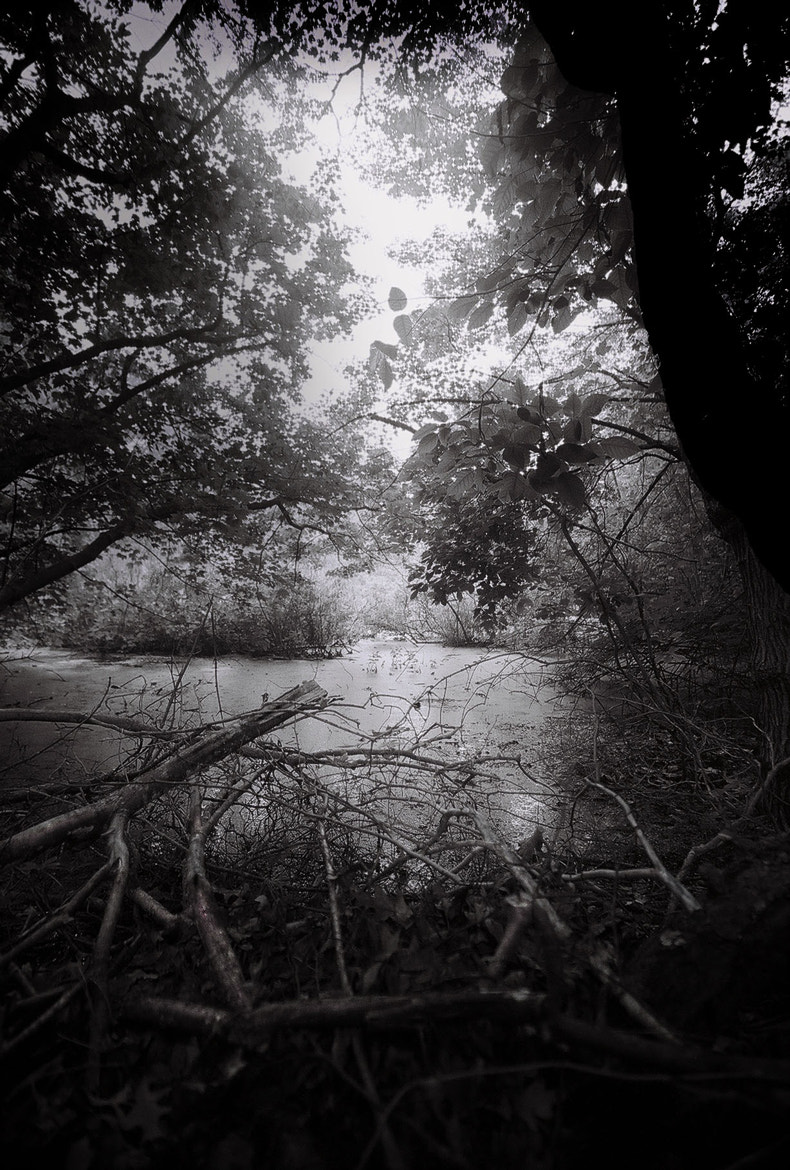 Photograph Freetown Swamp 2 by Terry Letton on 500px