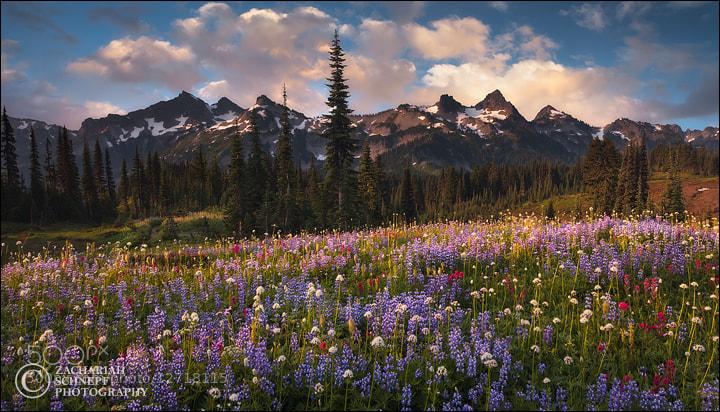Photograph Wildflower Fields and Tatoosh  by Zack Schnepf on 500px