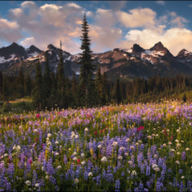 Wildflower Fields and Tatoosh  by Zack Schnepf (ZackSchnepf)) on 500px.com