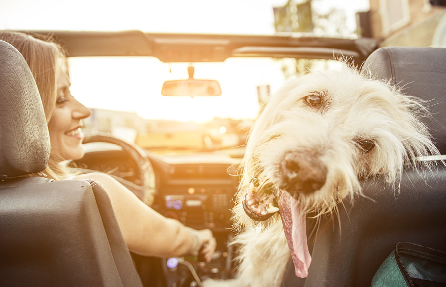 Woman and her labradoodle dog driving with the car by Cristian Negroni on 500px.com