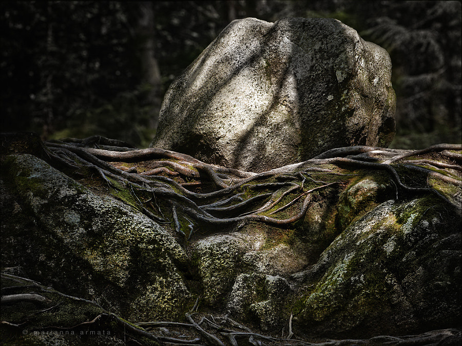 Cradled among the roots