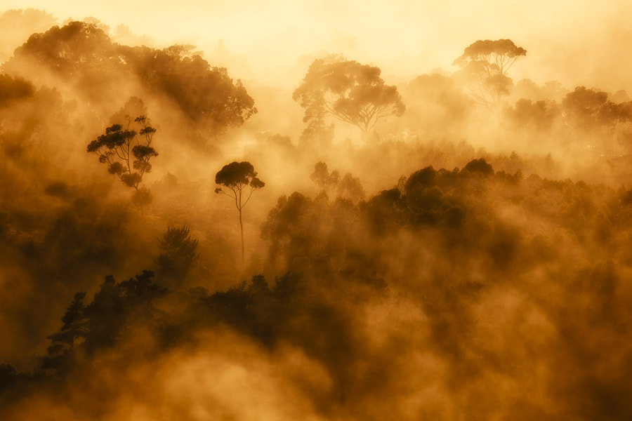 Photograph Trees in The Mist by Mario Moreno on 500px
