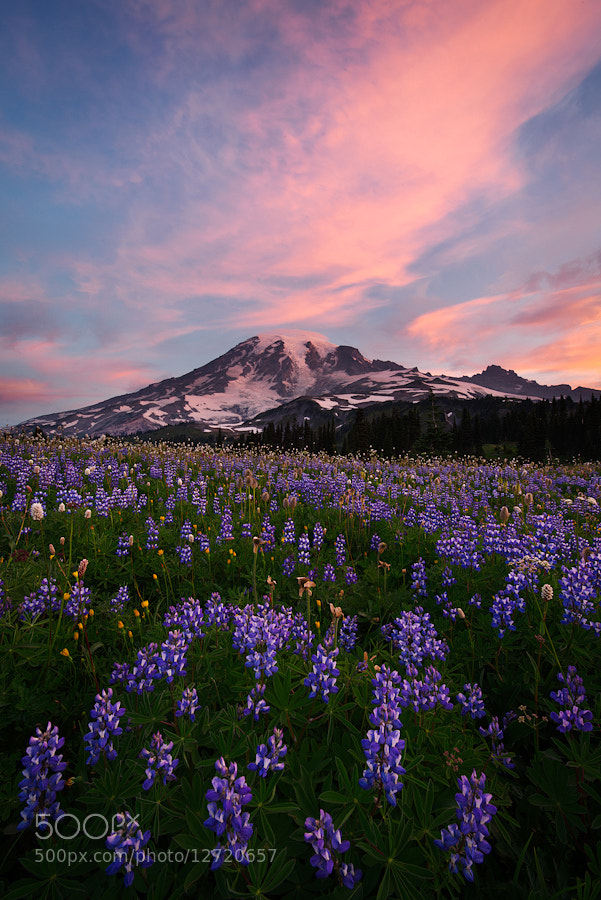 Photograph Tahoma by Alex Mody on 500px