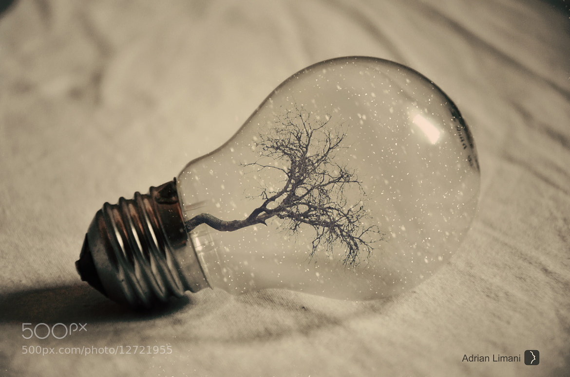 Photograph coldy winter bulb by Adrian Limani on 500px