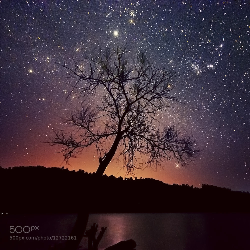 Photograph Tree Stars by Esmar Abdul on 500px