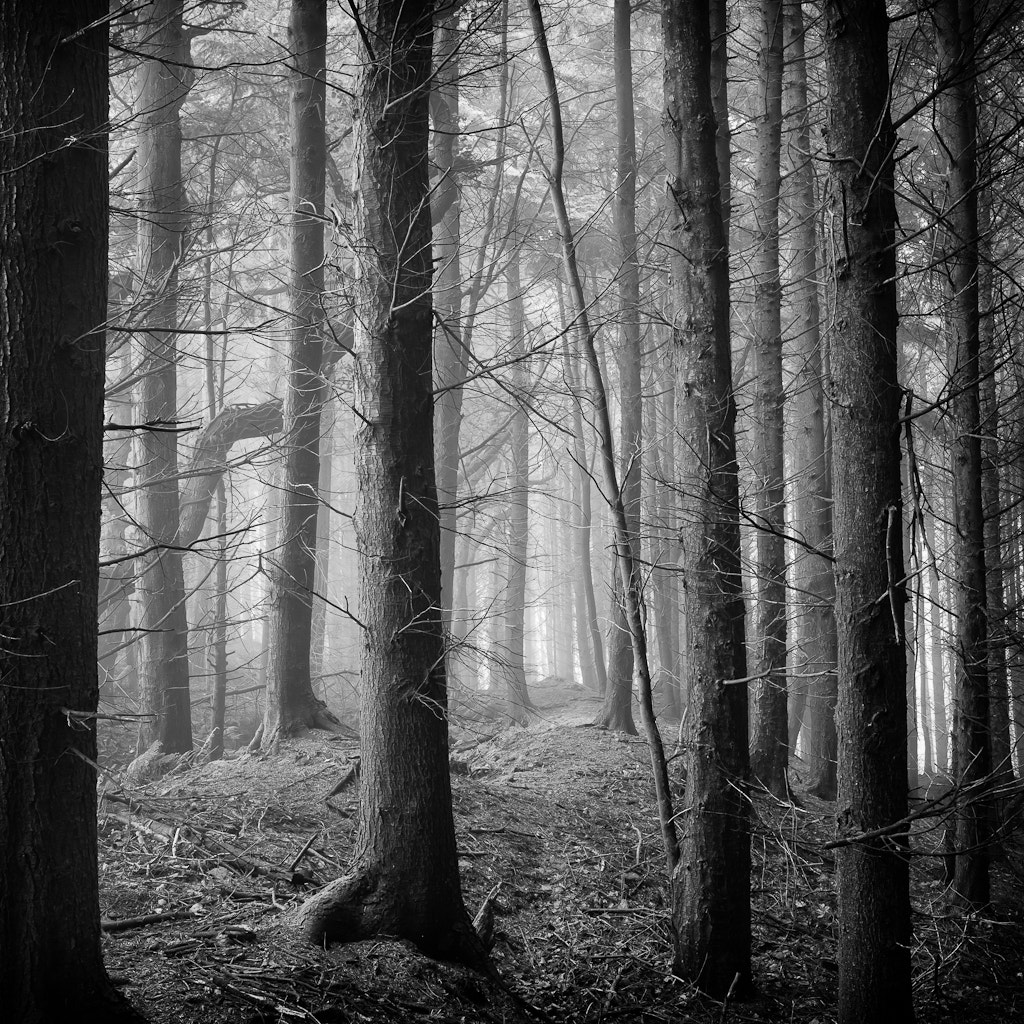 Photograph Luxulyan Lost by Dean Forrest on 500px